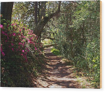 Azalea Path  Wood Print