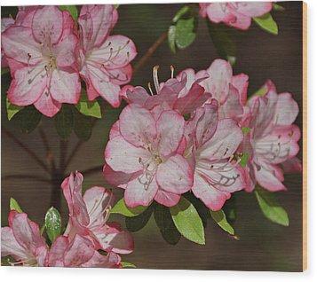 Wood Print featuring the photograph Azalea by Sandy Keeton