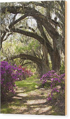 Azaleas And Live Oaks At Magnolia Plantation Gardens Wood Print by Dustin K Ryan
