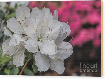 Wood Print featuring the photograph Azaleas In Turtle Creek by Diana Mary Sharpton