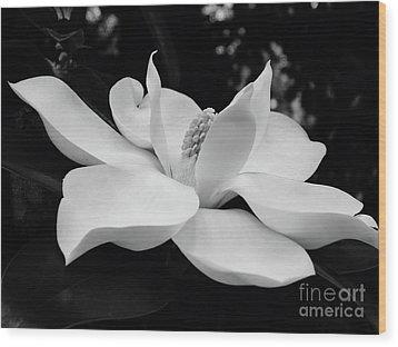 B W Magnolia Blossom Wood Print