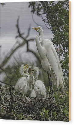 Babies In The Nest Wood Print