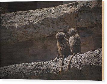 Baboon Brothers Wood Print by Stewart Scott