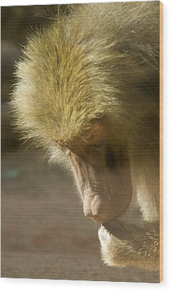Baboon Craps Shooter Wood Print by Richard Henne