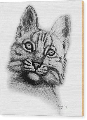 Baby Bobcat Wood Print by Nick Gustafson