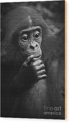 Wood Print featuring the photograph Baby Bonobo by Helga Koehrer-Wagner