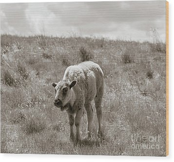 Wood Print featuring the photograph Baby Buffalo In Field With Sky by Rebecca Margraf