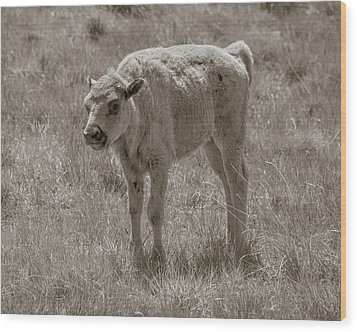 Wood Print featuring the photograph Baby Buffalo by Rebecca Margraf