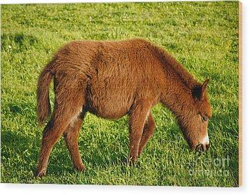 Baby Donkey Wood Print by Gaspar Avila