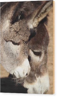 Baby Donkey Wood Print by Pauline Ross