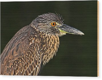 Wood Print featuring the photograph Baby Face - Yellow-crowned Night Heron  by HH Photography of Florida