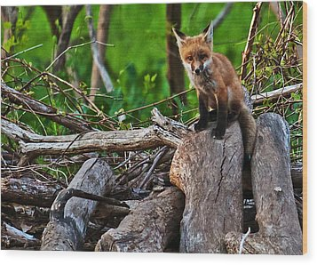 Baby Fox Wood Print by Edward Peterson
