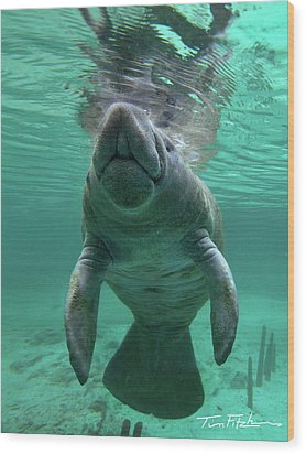 Baby Manatee Wood Print by Tim Fitzharris
