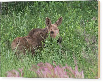 Baby Moose In The Grass Wood Print