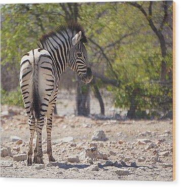 Baby Zebra Wood Print
