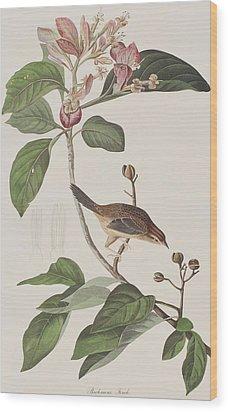 Bachmans Sparrow Wood Print by John James Audubon