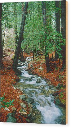 Back Country Creek Wood Print by Gary Brandes
