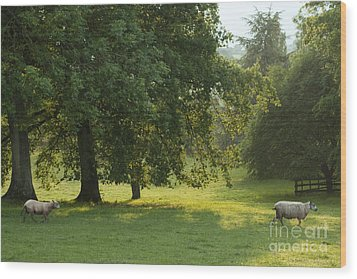 Back From The Meadow Wood Print by Angel  Tarantella