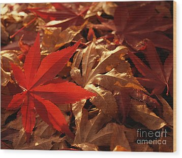 Back-lit Japanese Maple Leaf On Dried Leaves Wood Print by Anna Lisa Yoder