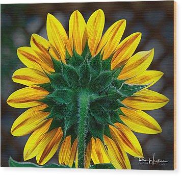 Back Of Sunflower Wood Print