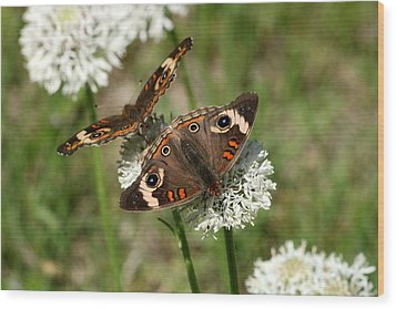 Back To Back Butterflies Wood Print