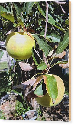 Back Yard Apples Wood Print by Mindy Newman