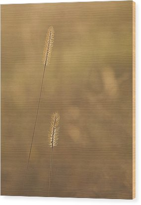 Backlight Grass Stalks Wood Print by Barry Culling