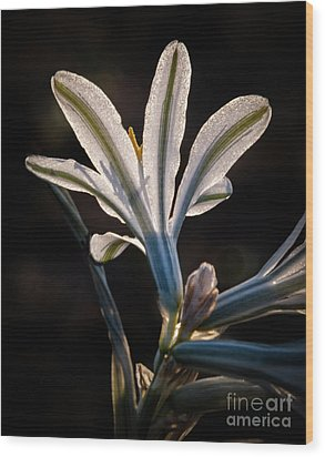 Wood Print featuring the photograph Backlit Ajo Lily by Robert Bales