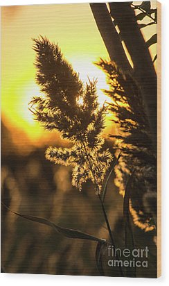 Wood Print featuring the photograph Backlit By The Sunset by Zawhaus Photography