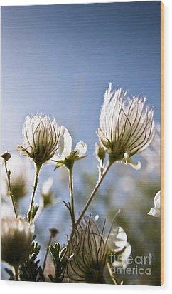 Backlit Fuzzy Flower Wood Print by Ray Laskowitz - Printscapes
