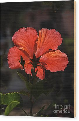 Wood Print featuring the photograph Backlit Hibiscus by Robert Bales