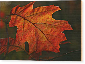 Backlit Leaf Wood Print