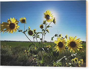 Wood Print featuring the photograph Backlit Sunflower 1 by Dave Dilli
