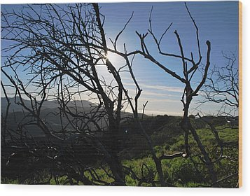 Wood Print featuring the photograph Backlit Trees Overlooking Hillside by Matt Harang