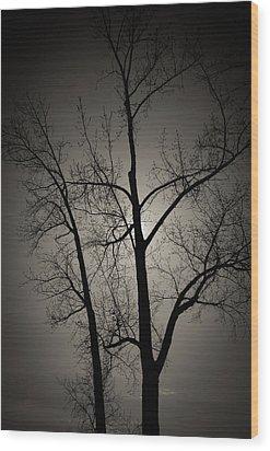 Backlit Trees Wood Print