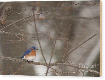 Backyard Blue Wood Print
