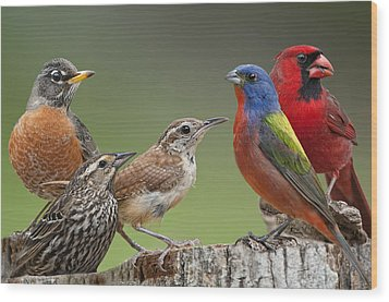 Backyard Buddies Wood Print