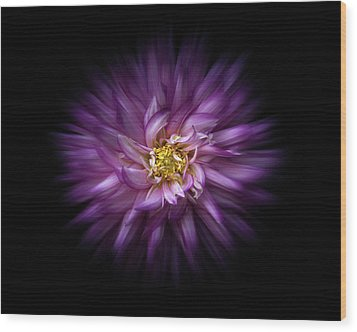 Wood Print featuring the photograph Backyard Flowers 20 Color Flow Version by Brian Carson