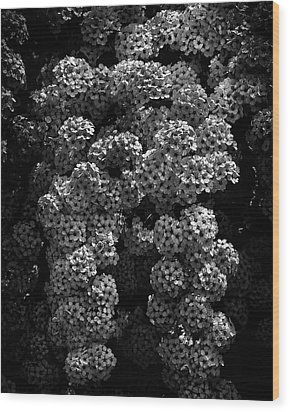 Wood Print featuring the photograph Backyard Flowers In Black And White 21 by Brian Carson