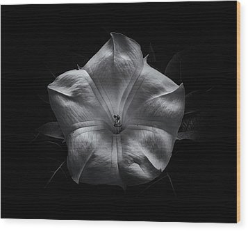 Wood Print featuring the photograph Backyard Flowers In Black And White 24 by Brian Carson
