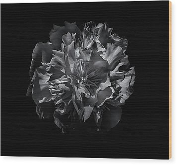 Backyard Flowers In Black And White 25 Wood Print by Brian Carson