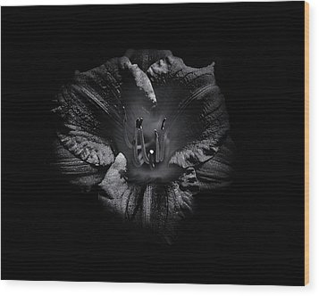 Wood Print featuring the photograph Backyard Flowers In Black And White 26 by Brian Carson