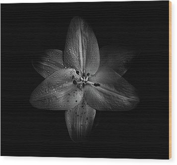 Wood Print featuring the photograph Backyard Flowers In Black And White 28 by Brian Carson