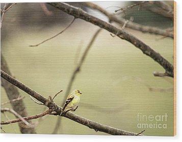 Backyard Yellow Wood Print