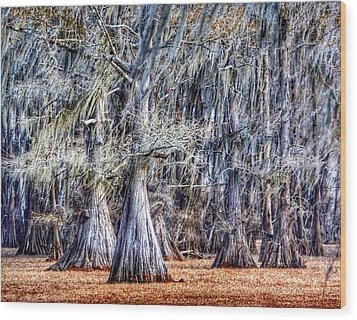 Bald Cypress In Caddo Lake Wood Print by Sumoflam Photography