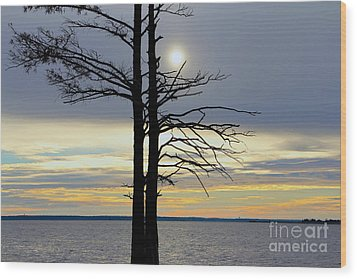Bald Cypress Silhouette Wood Print