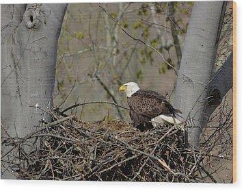 Bald Eagle 01 Wood Print by Ann Bridges