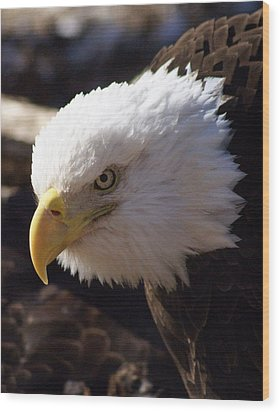 Bald Eagle 2 Wood Print by Marty Koch