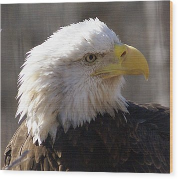 Bald Eagle 3 Wood Print by Marty Koch