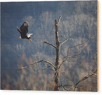 Bald Eagle At Boxley Mill Pond Wood Print by Michael Dougherty